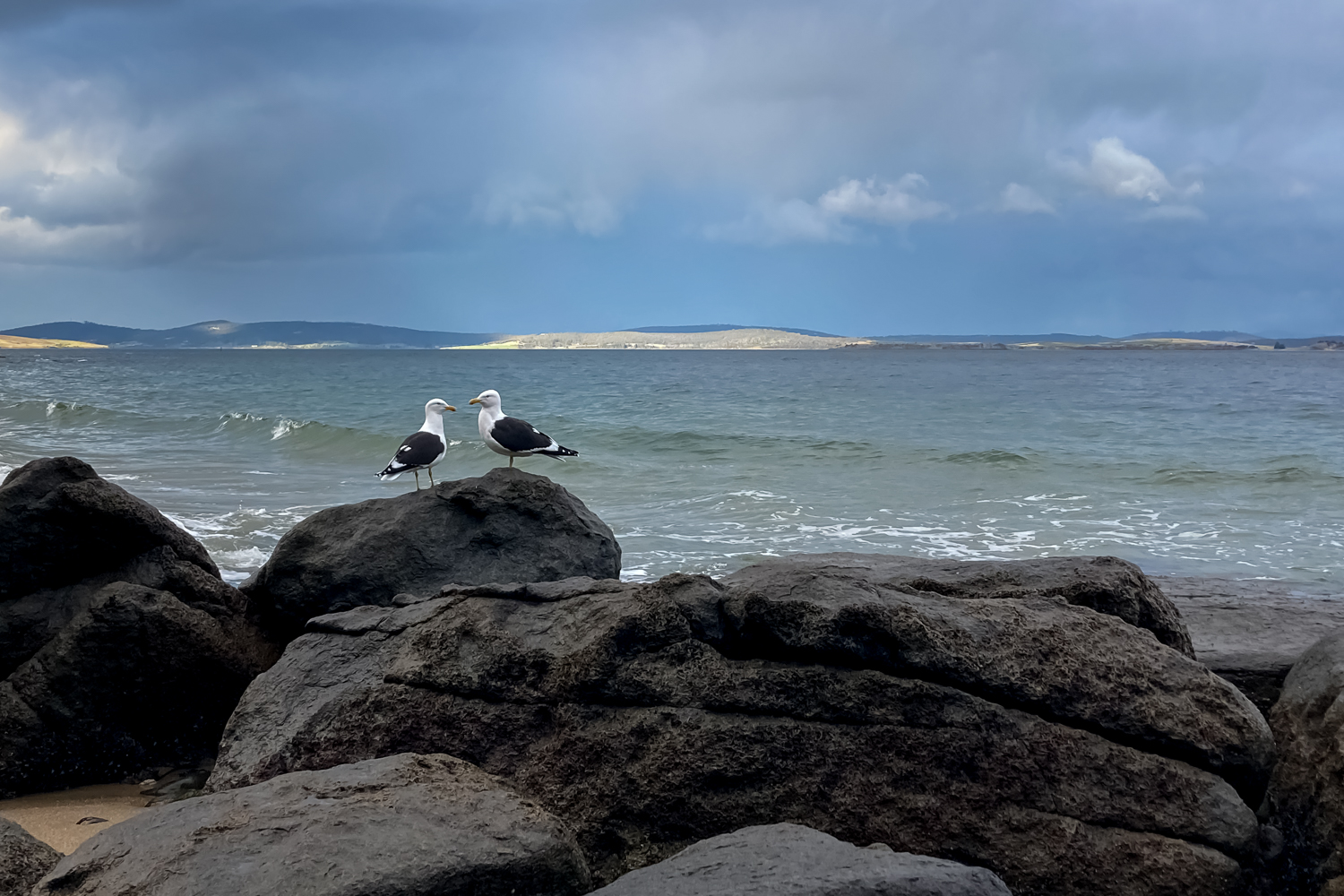 Two gulls on a rock at the beach